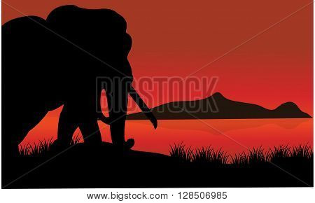 Single elephant silhouette of scenery with lake