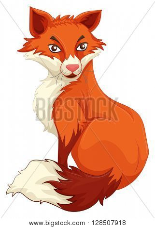 Red fox sitting on white background illustration