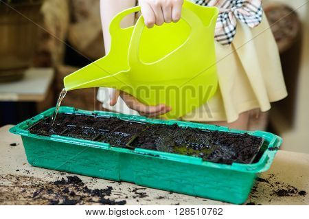Girl holds in the hands of the protein. From watering flowing stream of water in a green tray with the ground