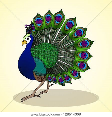 Amazing peacock. Aviculture and poultry. Vector illustration.