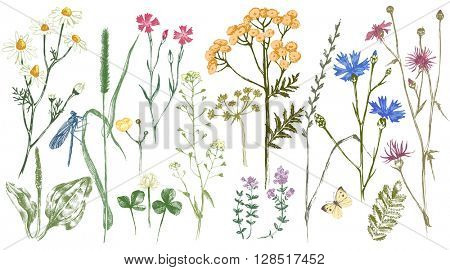 Hand drawn set with colorful herbs and flowers