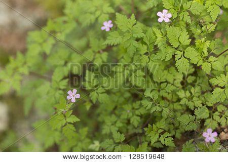 Soft nature background