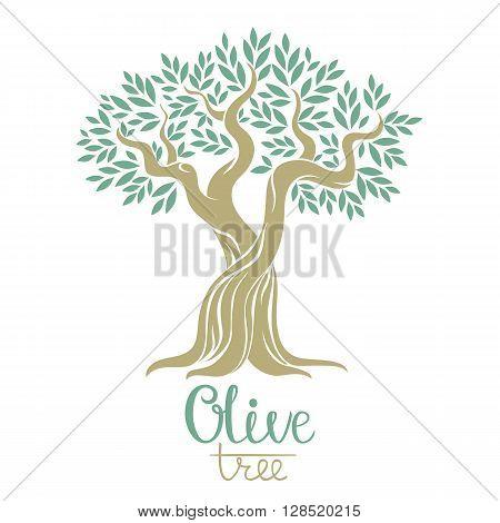 Olive tree vector illustration. Olive oil. Vector olive tree for labels pack.