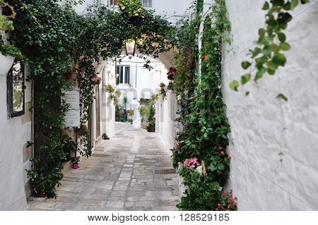 beautiful view of scenic narrow alley with plants Ostuni Apulia southern Italy