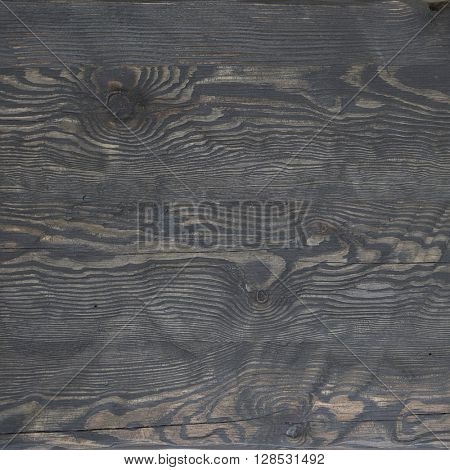 Texture of natural wood background closeup