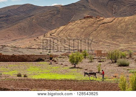 Typical farmer working a small plot of land in the Anti-Atlas mountains.