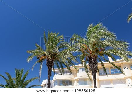 Palm Trees against the blue sky at summer