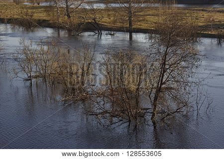 Trees in water flood in Siberia Russia