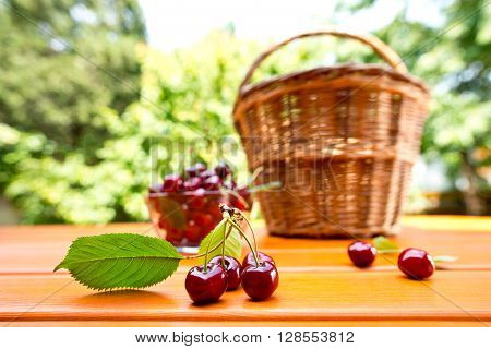 red cherry and hand basket in the garden