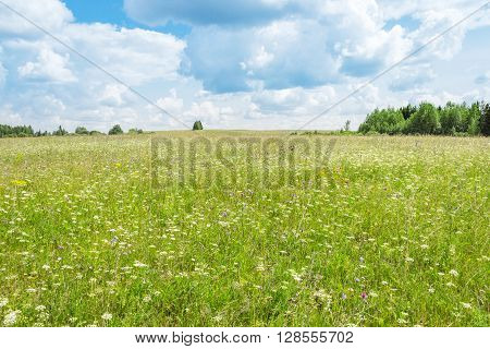 Summer meadow with wild flowers on a cloudy day
