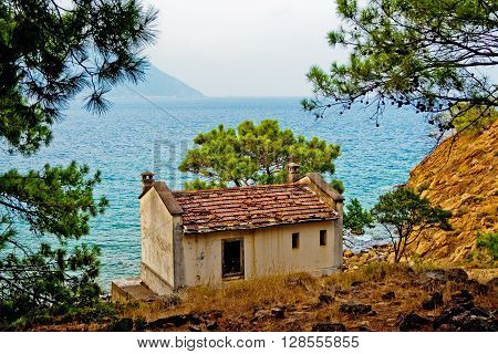 Old abandoned small house in the pines on the seashore