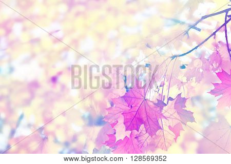 Abstract Autumn foliage background with copy space. colorful autumn foliage.