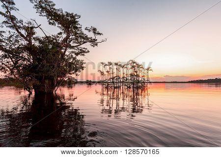 Water Trees And Palms Laguna Grande National Park Cuyabeno South America