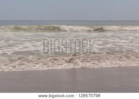 Jack Russell Terrier Female Dog Runs Jumps And Plays In The Water Of Pacific Ocean