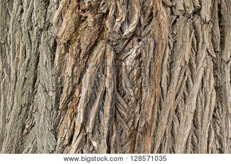 Closeup background photo of texture of old and dry tree bark