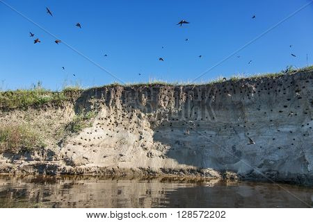 River-bank with breeding grounds of sand martins.