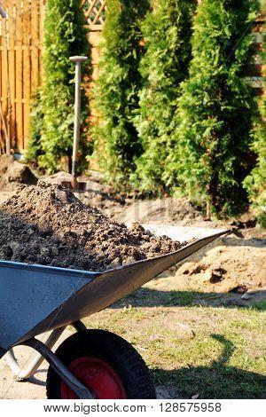 planting trees in garden, barrow with garden soil