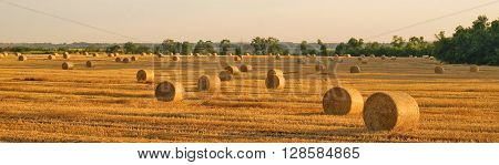 hay-roll in golden the field landscape panorama
