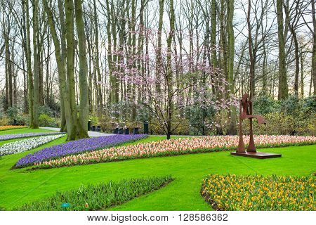 Lisse, Netherlands - April 4, 2016: Colorful flowers blossom in dutch spring garden Keukenhof, Lisse, Netherlands