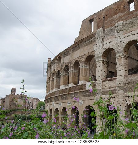 Flowers at springtime by the Colosseum in Rome Italy