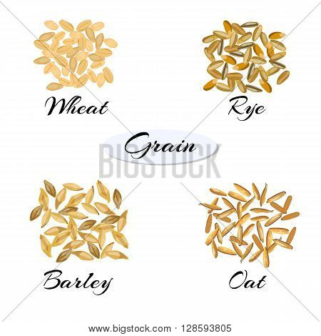 Cereal. Different types of grain - wheat rye barley oats. Vector illustration EPS 10.