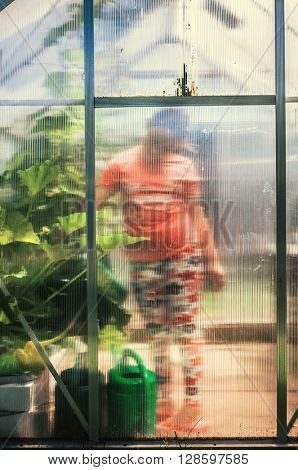 Child pouring water to plants in greenhouse