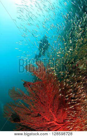 Scuba diver exploring coral reef in ocean