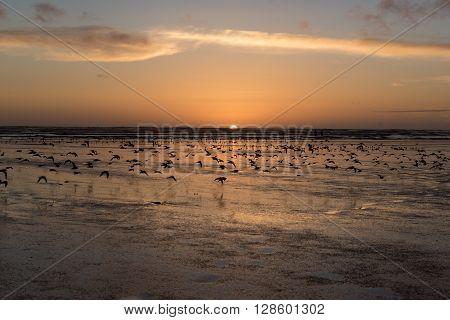 Bird frenzy at a west coast beach