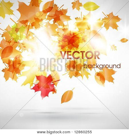 Abstract fly leafs vector background