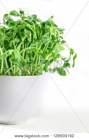 closeup green pea sprout in the white cup