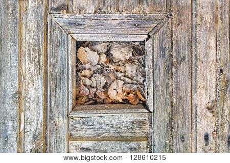 Part of an old wooden door with dried leaves in a small window on it