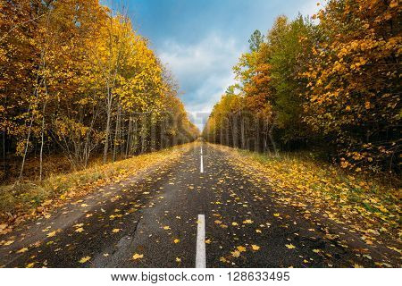 Open Asphalt Road Path Walkway Through Autumn Forest In Sunny Day. Nobody