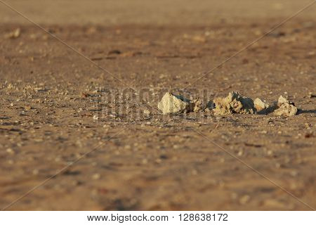 looking Martian landscape of bare stony ground with several sharp stones