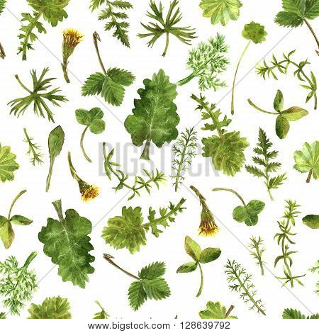 Seamless pattern with  watercolor drawing wild flowers, herbs and leaves, painted  wild plants, botanical illustration in vintage style, color drawing floral background, hand drawn  illustration