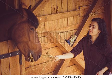 Young woman feeding the horse. Horse is in the stable and taking energy for the next race.