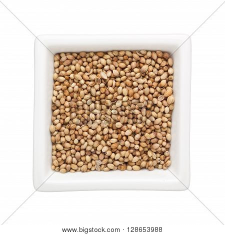 Coriander seeds in a square bowl isolated on white background