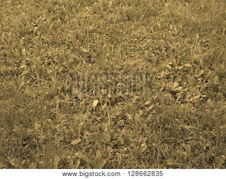 Grass Meadow Sepia