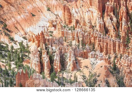 Hoodoos In Bryce Canyon National Park, Usa.