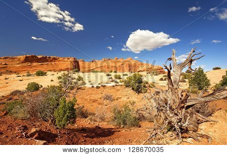 delicate arch viewpoint in arches national park utah