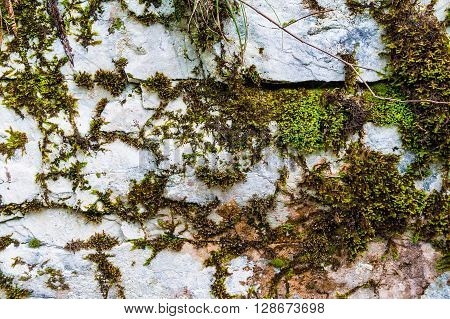 Texture of steep rocky wall covered with moss front view