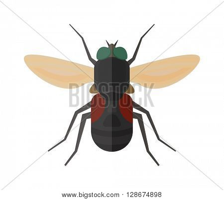 Fly insect vector isolated