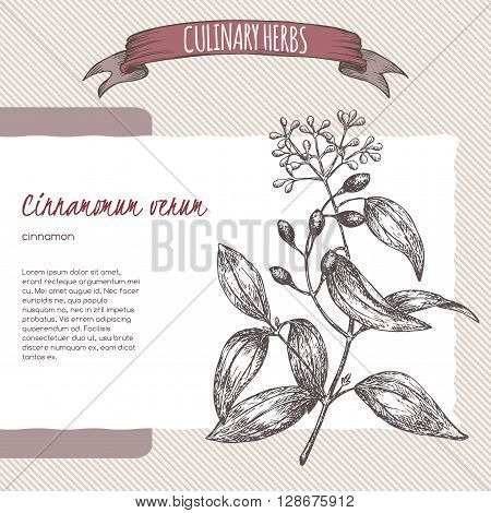 Cinnamomum verum aka cinnamon vector hand drawn sketch. Culinary herbs collection. Great for traditional medicine, perfume design, cooking or gardening.