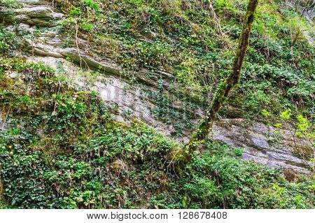 Steep rocky wall and tree covered with moss and grass front view