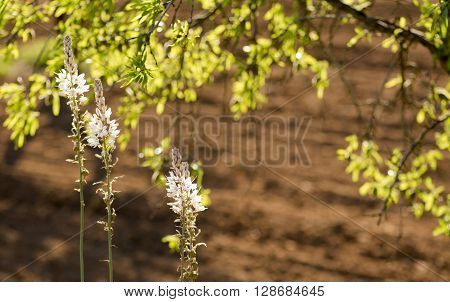 Wildflowers from the Mediterranean back lit by the late even sun on the edge of a ploughed field under almond trees room for copy space and text ideal for a backdrop.