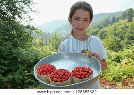 TRESNJEVIK, MONTENEGRO - JULY 19, 2015: young girl shows some basket full of wild strawberries, local fruit of Tresnjevik mountain between Andrijevica and Kolasin.
