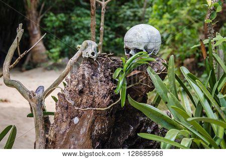skull on tree stump on cadlao island el-nido palawan