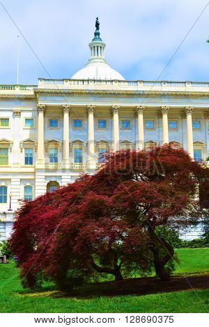 Federal Capital Building with columns and the rotunda surrounded by lush green landscaping taken in Washington DC