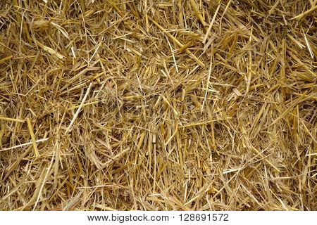 Pressed straw background - landscape format, abstract