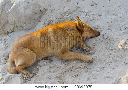 Cute mixed breed dog lying in the heap of sand