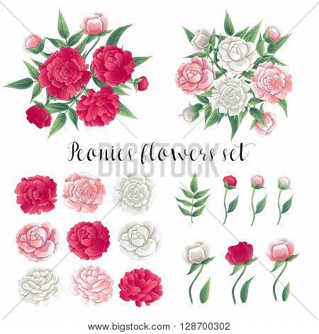 Flowers and Leaves. Pink and White Peonies Floral Set Vector illustration